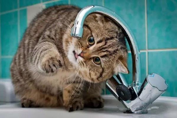 Betway必威_四川betway必威app牌饮水越冷越要多喝水